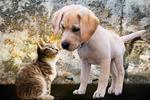 Votre animal de compagnie possède-t-il un sixième sens ?