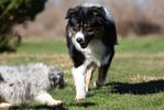 Apprenez à votre chien à bien accepter votre absence