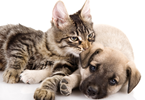 Vendre un chiot ou un chaton. Réglementation