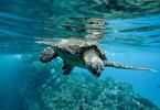 Quiz: Les tortues