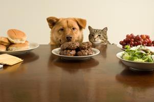 Alimentation du chien et du chat, les nouvelles modes