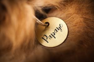 Année 2019 – Idées de nom pour votre chien ou votre chat avec la lettre P