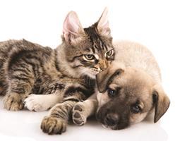 Les antibiotiques : le bon usage pour mon chien et mon chat