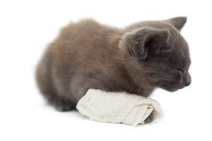 Les gestes pour secourir un chat accidenté