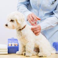 Visite chez le vétérinaire : comment rassurer votre chien ?
