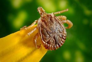 Retour des beaux jours et des parasites : quels dangers pour nos animaux ?