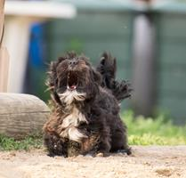 Aboiements intempestifs chez le chien