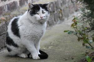 Et si mon chat avait de l'arthrose ?