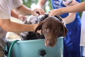 Hygiène et soins de nos animaux