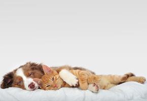 L'obésité de nos chiens et chats.