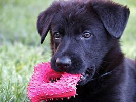 Jouez avec votre animal!!!